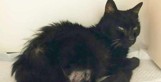 足に穴があき大怪我を負った野良猫…実は脅威的な猫だった!?
