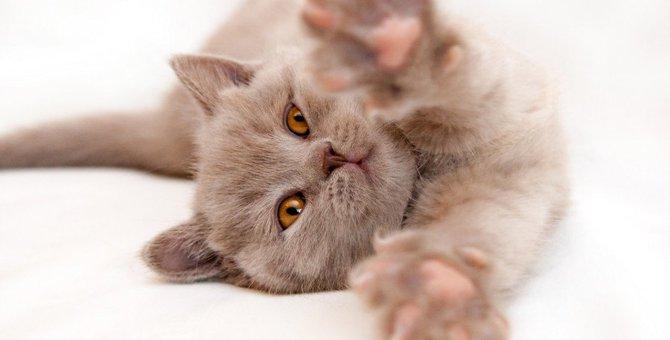 実は人間だけじゃなかった!猫の骨粗鬆症について