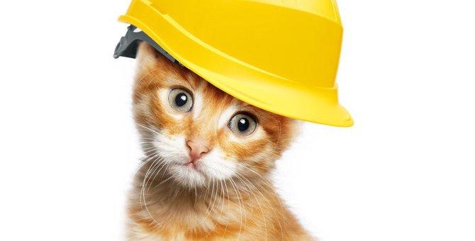猫の寿命を縮める飼い主の『危険な生活習慣』5選