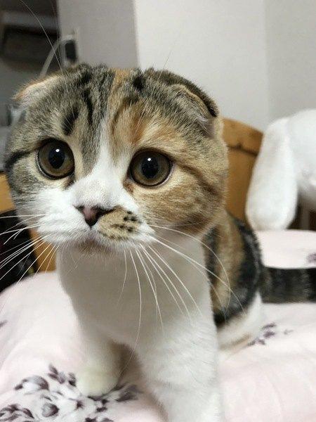 猫が飼い主から目を離さない10の心理