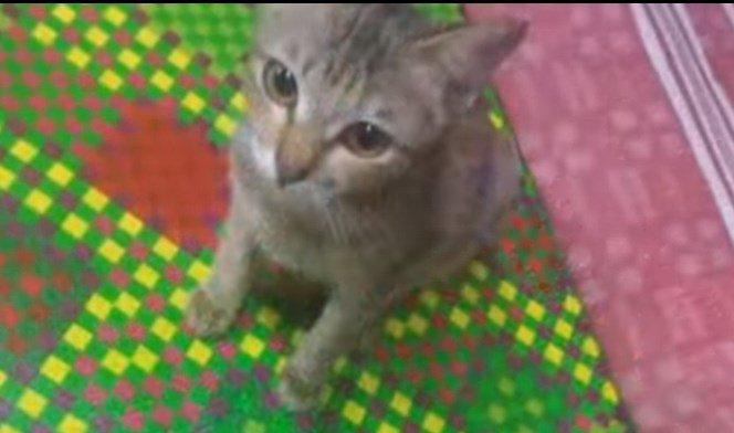イヤホンを壊した子猫が、代わりにもってきたものとは・・・