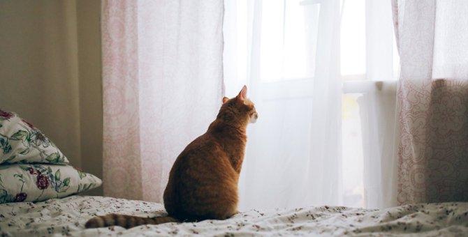 猫が『心を閉ざしている』ときの仕草や行動4つ