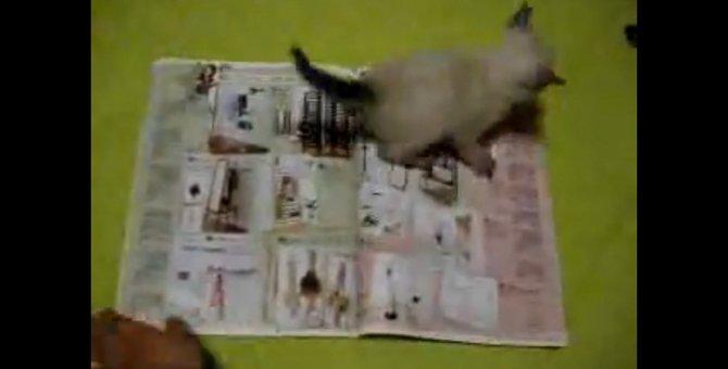 「ページは絶対めくらせにゃい」雑誌を広げると現れる子猫!