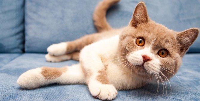 猫の「耳ダニ」は室内にもいるの?感染源と治し方