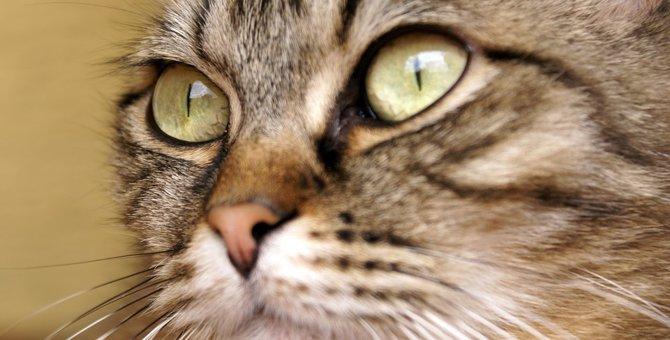 猫のひげの重要な役割や特徴とは