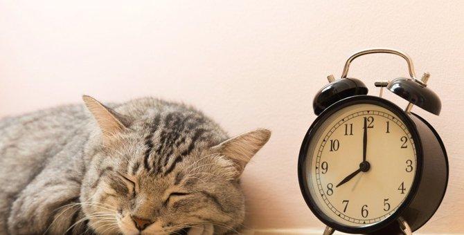 猫に目覚まし時計がいらない理由って?