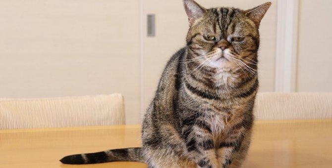 猫が落ち込んでしまう『飼い主のNG行動』5選