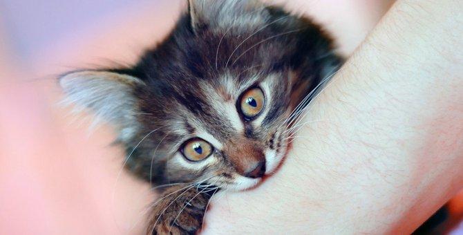猫が『噛む力』は約100kg!噛まれないための予防策3つと噛まれた時の対処法