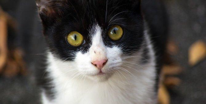 ぶち猫の性格や特徴、毛色について