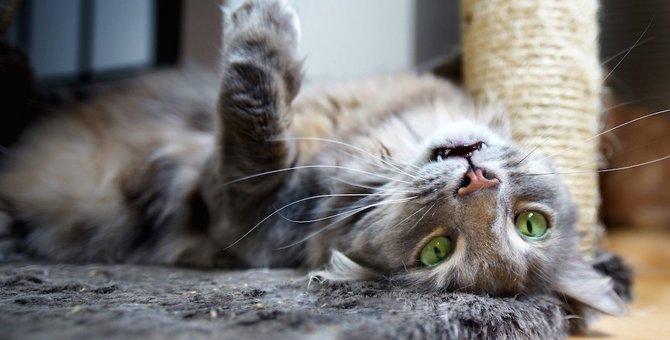 猫がメロメロになるマタタビの成分、与え方やおすすめ商品