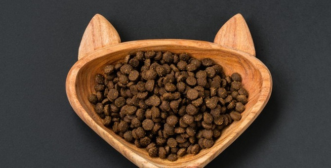猫の食器の選び方と管理方法について
