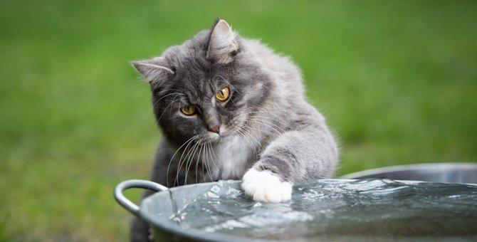 猫が飲み水で遊んでしまう心理5つ!水をおもちゃにしてしまう理由とは?