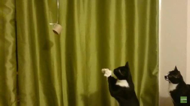 お願い届いて~!お祈りポーズを駆使してもおもちゃをゲット出来ない猫