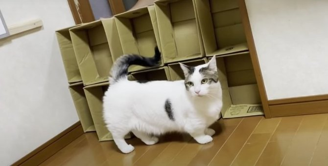 予想外!猫ちゃんの空中ジタバタ劇場