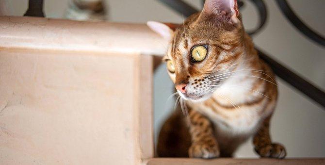 猫が『信用できない』と判断した人にする態度4つ