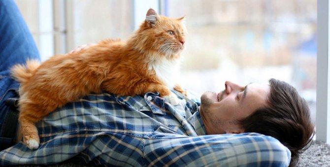 猫がわざと飼い主を踏む3つの理由