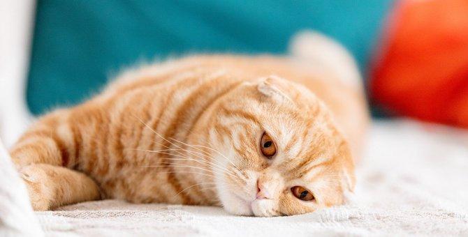 猫が『ご機嫌斜めなとき』の対処法3選
