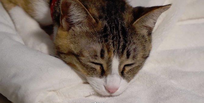 猫ちゃん達の美しいウィスカーパッド