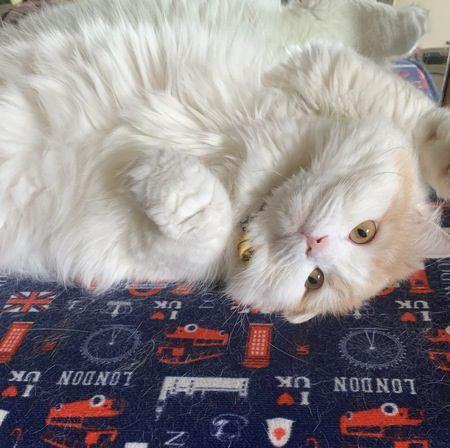 飼い主からの愛を確信している猫の特徴5つ