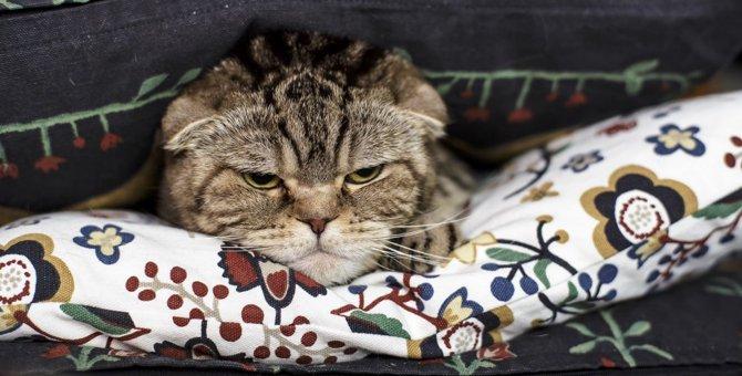 猫のテンションが『ダダ下がり』になること5つ