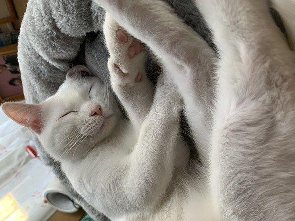 猫から好かれる人が絶対にしていない5つのこと