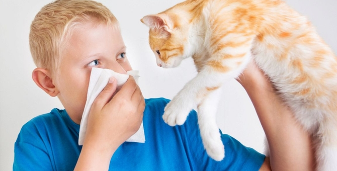 猫のお尻が臭い!原因と肛門腺の対処方法