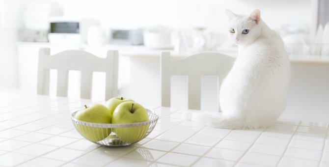 トルコの泳ぐ猫「ヴァン」の特徴と詳細!秘密に迫る