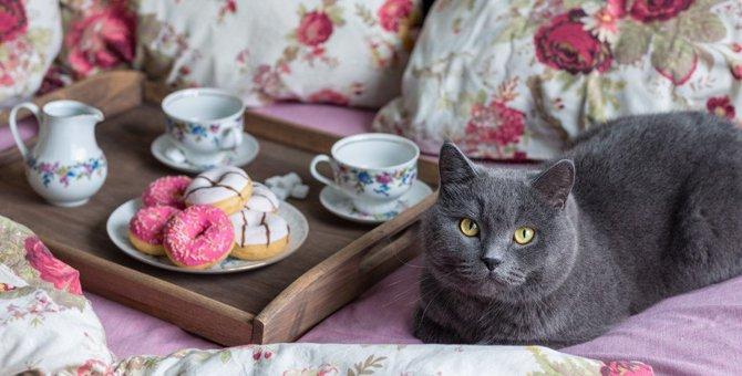 猫は『砂糖』を食べると危険?3つの理由と食べてしまった時の対処法