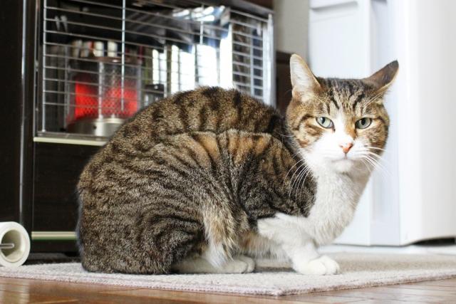 猫の寒さ対策と注意すべき事について