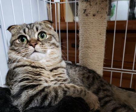 【冷静なフリ】実は焦っている猫の仕草5つ