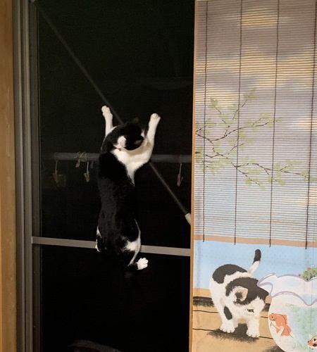猫の「網戸トラブル」を回避する秘策4つ