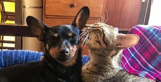 野良子猫と大親友のわんちゃん…ついに幸せな兄弟になる♡