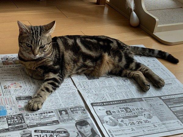 【あるある】愛猫の困った行動5選【でも可愛い】