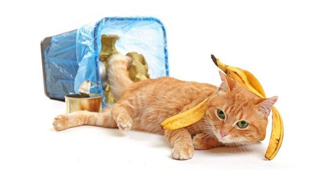 猫がゴミ箱をあさる原因と6つの対策法