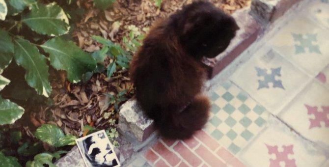 ヘミングウェイの猫に会いに。アメリカ最南端キーウエストの54匹の猫