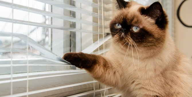 猫が家出する理由と対策について