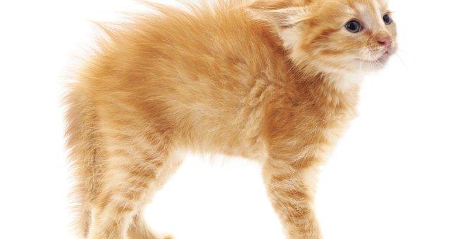 猫が『怖がっている』ときにする行動3つ