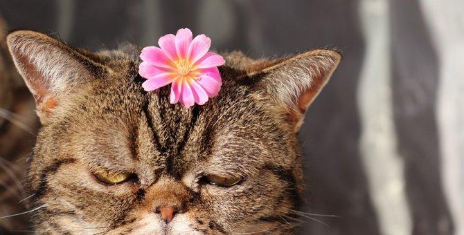 猫が『ありえない!』と思っている飼い主の行動3つ