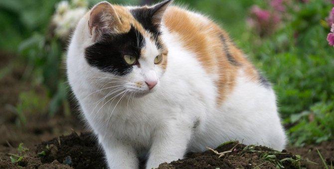 猫のほりほりにはどんな意味が?
