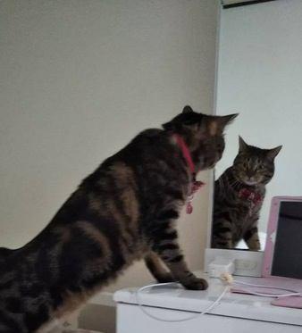 愛猫が喜ぶ部屋のレイアウト例5つ