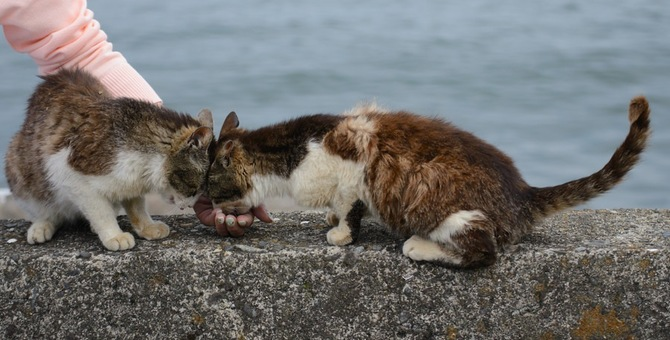 琵琶湖に浮かぶ猫島「沖島」の魅力とは