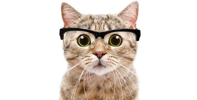 賢い猫の品種ランキング発表!知的な猫の特徴も