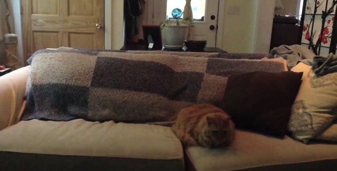 ポーカーフェイスを装い、ドッキリの重役を任された猫ちゃん