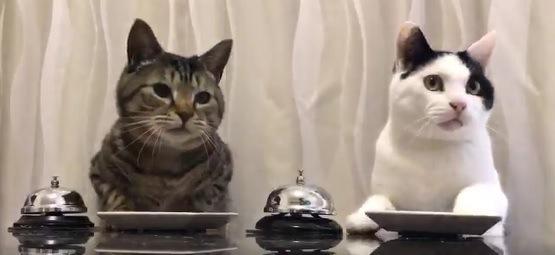 まるで気分はレストラン!?ベルでごはんを催促する猫さんたち