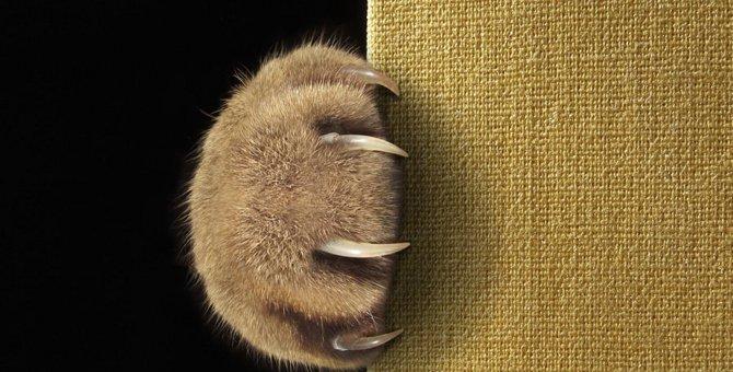 猫が爪をとぐ理由とその対策