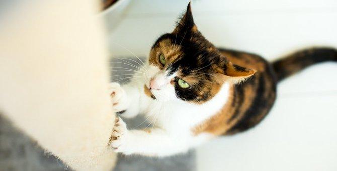 猫が家具をボロボロにしてしまう理由