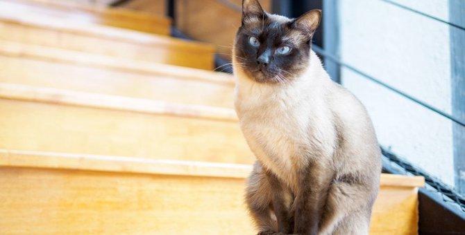 猫の命を脅かす『お部屋の危険』4つ!すぐできる対策をチェック!
