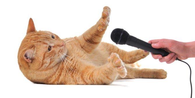 「ねこふんじゃった」は猫が飛んでいっちゃう曲?知ってそうで知らない謎に迫る!!
