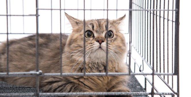 3段ある猫のケージのオススメ商品5選