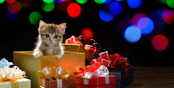 猫も飼い主も嬉しいプレゼント!選ぶ時のポイントとおすすめ商品